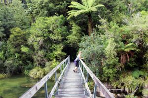 what to do in New Zealand
