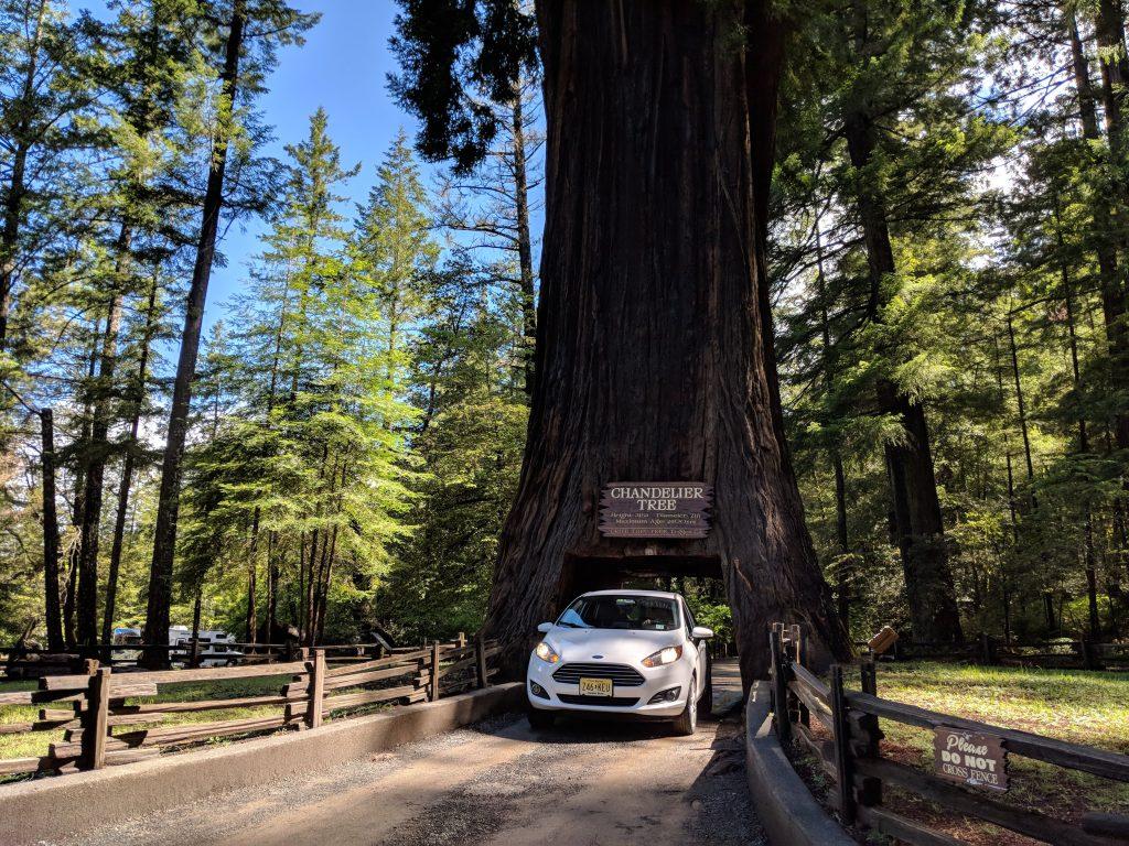 two-week US west coast road trip california RV drive thru tree
