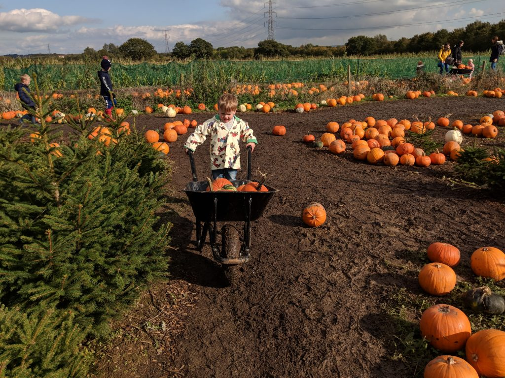 pumpkin-picking-essex-2020