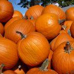 pumpkin-picking-essex-2020