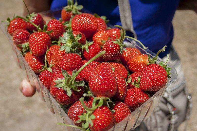 fruit picking essex